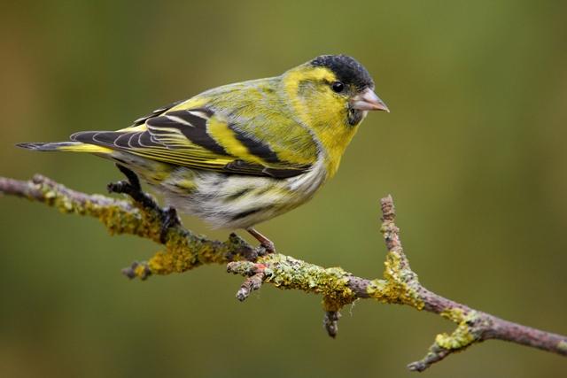 Guided Bird-Watching Walk at Powerscourt Waterfall in Wicklow