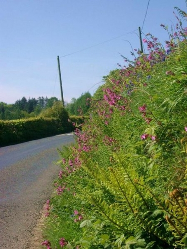 """Irish Wildlife Trust launches roadside habitats conservation project, """"Networks for Nature"""""""