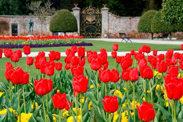 Tulip Fever hits Powerscourt Gardens