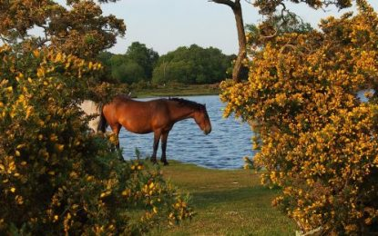 New Forest remains a favourite touring destination for Caravan & Motorhome Club