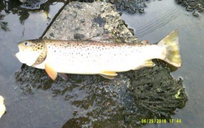Inland Fisheries Ireland prosecutes Irish Water for 2 pollution incidents in Cavan
