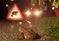 Looking for volunteers to help Frog Migration on Barnacullia Road, Sandyford during March