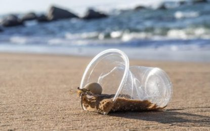Research highlights impact of plastic pollution on marine life