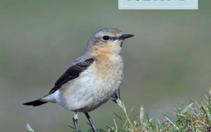New Survey of Clare Island, Volume 9: Birds; Documents the current status of the bird community