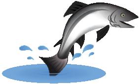 2021 – A new salmon season dawns